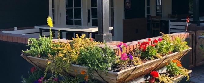 Create a Beatiful Backyard - Flower Street Urban Garden