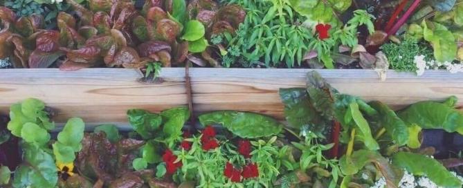 Vertical Gardening to Grow Food