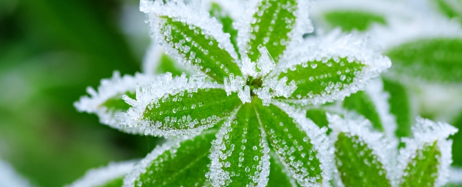 Winterize your Vertical Garden
